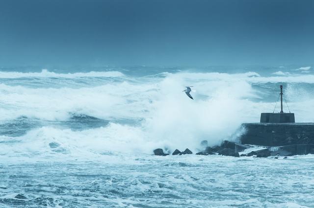 台風 災害に強い